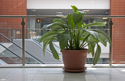 Office plants. Flower pot in office building